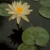 98/08/05--Garden 5--Takaaki Iwabu photo-- ??? at Marty GarnerÕs pond...
