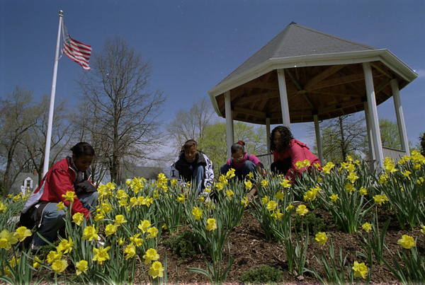 98/04/18 Spring Weeding *Dennis Stierer photo - Sheleka Massey, LaTasha Thomas, ShaToya Thomas, and Nina Richardson, all with the Lockport Octongon Club were at the Children's Memorial Park on Saturday, helping along with about 15 other students in cleaning, weeding, and sprucing up the grounds around the park.