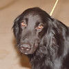 2/13/97 Pet of the Week - James Neiss Photo