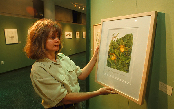 "6/10/97 Carol Woodin - James Neiss Photo -  Carol Woodin, a Botanical Artist, shows off her painting ""The Large Yellow Ladies Slipper"" which will hang with other artists work at the Buffalo Museum of Science International Horticulture Conference at the museum."