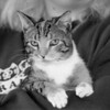 2/6/97 Pet of the Week - James Neiss Photo
