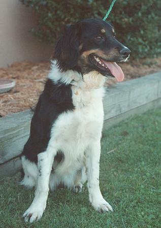 9/4/97-- pet of the week