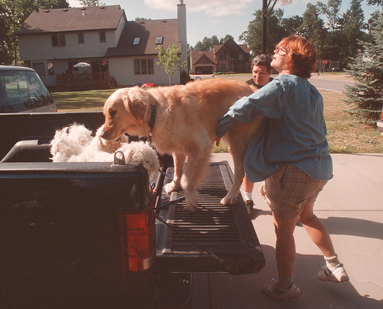 97/08/05 Gerbasi Dogs 2 - James Neiss Photo -Kathy Gerbasi helps her dog Bob onto the truck.