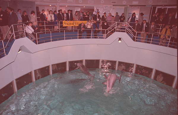 "3/13/97--SEASONINGS--DAN CAPPELLAZZO PHOTO--A PACK UPPER DECK  AND LOWER WINDOWS WATCHE THE DOLPHIN PREFORMANCE DURING ""SEASONINGS"" AT THE AQUARIUM OF NIAGARA.<br /> <br /> LOCAL"