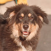 97/08/14 Pet of the Week - James Neiss Photo