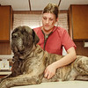 "98/02/27 Green Acres *Dennis Stierer Photo - Rachel, a vet asst. at Green Acres Animal Hospital checks the heart of an 8 year old English Mastiff named ""Thaisa""."