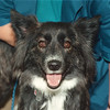 5/1/97 Pet of the Week - James Neiss Photo -