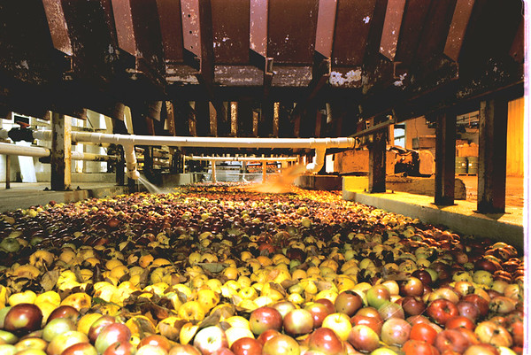 "98/11/06 Apples Not Moving *Dennis Stierer Photo -<br /> Apples just sit in an area known as the ""Pit"", which is where the apples begin their process by washing the fruit first. Normally at this time of year this line would be moving using two shifts of workers."