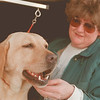 "98/01/23--Labradors 3--Takaaki Iwabu photo-- Tery Fink takes care of Yellow Lab ""Zoe."" Fink, 12-year-veteran breeder, said she raied more than 100 labradors puppies."