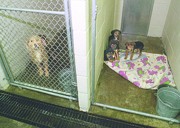 1/7/97 Bitch and Puppies - James Neiss Photo - SPCA's Rainbow Animal Shelter.