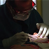 98/11/06 Tooth Work *Dennis Stierer Photo -<br /> Dr. Louis A. Surace, a pediatric dentist in Lockport works on the tooth of patient Collin Boskat,5.