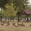 8/1/97 J. Davis Park 1--Takaaki Iwabu photo-- Empty park.... Weekdays are very quiet at Joseph Davis State Park. (for Ann's story on Lewiston's plan on making a golf course) <br /> <br /> Monday, 1A, color