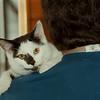 97/12/11  Pet of Week- Jim Neiss Photo-