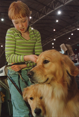 2/21/97- dog show --Takaaki Iwabu photo-- Clair Elliott, 10, Naples, gets her golden retrievers Essie and Willie ready for the competition at Dog Show in Niagara Falls Convention Center Friday. <br /> <br /> loccal, Saturday