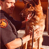 97/09/26 police dog--Takaaki Iwabu photo-- Police officer Stephen Reed started a patrol this week with Draco, the second police dog at Niagara Falls Police Dept. <br /> <br /> Saturday, color, 1a