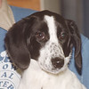 3/20/97 Pet of the Week - James Neiss Photo -