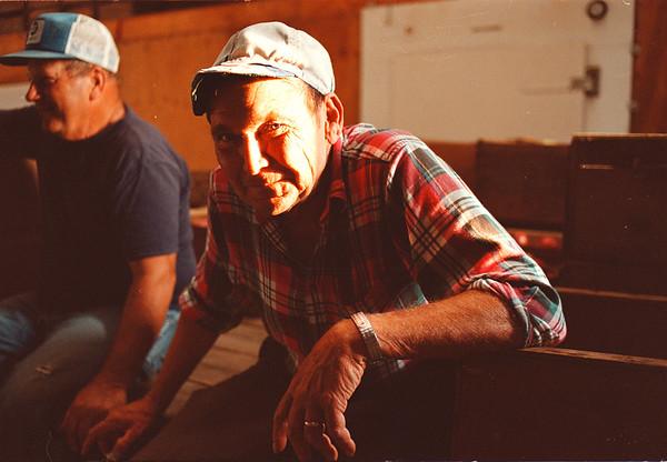 97/10/08-- a farmer--Takaaki Iwabu photo-- A retired welder Don Broecker work at The Koithan Farm on Shawnee Rd. helping the Farm pick up seasonal-croppings. <br /> <br /> Grapevine photo