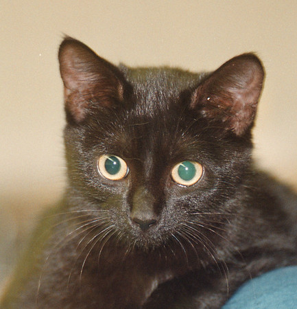 97/08/28 Pet of the Week - James Neiss Photo