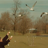 98/12/10 Feeding Seagulls - James Neiss Photo - Michael DiNicola of Niagara Street was out feeding the seagullÕs today. Said he came to Hyde Park to feed the ducks, but they didn't want the bread he had to freed them.