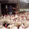 97/11/21 Turkeys Day - James Neiss Photo - Tom Britt, owner of Britt Farms, is mimicked by son Nick Britt 4yrs as he prepairs to drive a flock of turkeys to slotter for Thanksgiving.