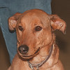 5/15/96 Pet of the Week - James Neiss Photo