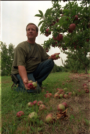 98/08/07 Apple Loss - James Neiss Photo - Local apple growers are going to let the juice apples stay on the ground at harvest time because of foreign imports making it unecconomical to process and sell. Here Jim Bittner, a partner at Singer Farms, shows off some Red Delicious Apples that fell because of bad weather which will the ground which will be added too at harvest time.