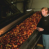 98/11/06  Apple Line Still *Dennis Stierer Photo -<br /> Kent Wakefield, Plant Superintentant  at Mayer Bros. Apple  Products Juice Plant in Somerset Looks over a very still apple line.