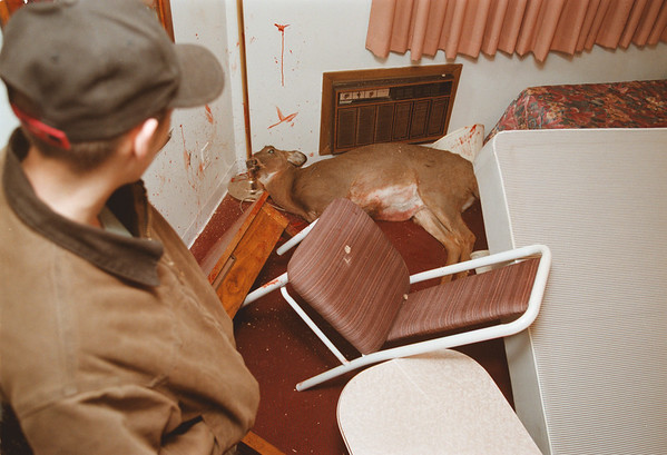 98/12/03 Dead Deer 1 - Vino Wong Photo - A curious occupant of the motel takes a glance at the motionless deer in room number 14 of the Red Carpet Inn, 6625 Niagara Falls Boulavard, Wednesday.
