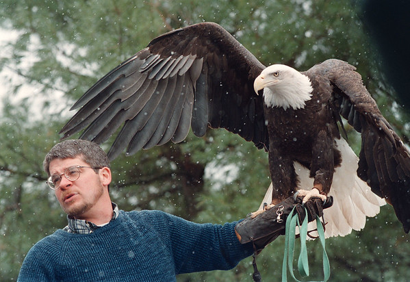 4/19/97-- wildlife 1--Takaaki Iwabu photo-- Paul T. Schnell, director at Institute for Environmental Learning, shows a bold eagle at Iroquois Wildlife Refuge's open house Sunday.