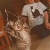 """7/17/97- cat story 1--Takaaki Iwabu photo-- Marion Calandrelli plays with her 2-month-old cat """"Will"""" at her home. She takes care of four cats. <br /> <br /> feature, Wednesday, bw"""