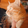 97/08/07-- pet of the week--Takaaki Iwabu photo-- Pet of the week, info attached.