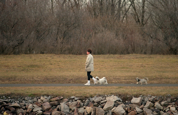 98/01/05 Walking the Dogs*Dennis Stierer - Unknown female walks her dogs on the canal path.