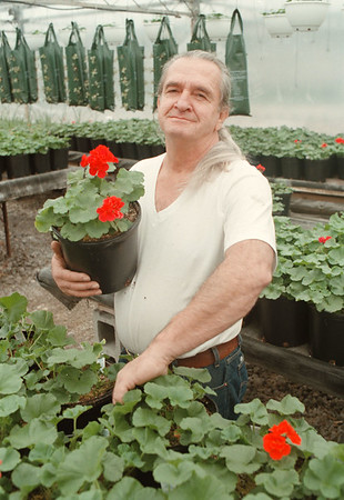 98/03/07-- Spring 2--Takaaki Iwabu photo-- Stephen Boka, owner of Boka Farm's Stand in Pendleton, holds a Geranium plant. The stand is located on Lockport Rd and Campbell Rd.