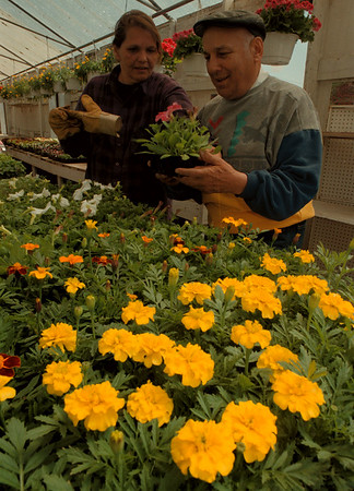 98/04/28--SPRING GARDENS--DAN CAPPELLAZZO PHOTO--DR. JOFFRE MOSES, YOUNGSTOWN, BUYS A PETUNIA WITH THE HELP OF ALCLIFF NURSERY, MILITARY RD,  EMPLOYEE JOYCE BOMBERRY.<br /> <br /> LOCAL