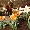 4/11/97-- flower show--Takaaki Iwabu photo--
