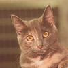 6/12/97 Pet of the Week - James Neiss Photo