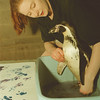 "98/02/25-- penguin print2--Takaaki Iwabu photo-- Aquarist Michele Long washes off ""Opus"" feet after the pengun painted on the white board. <br /> <br /> black and white"