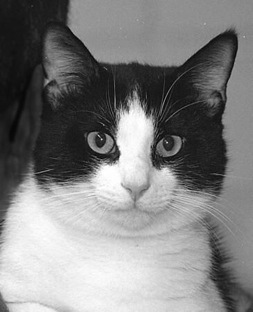 1/3/97 Pet of the Week - James Neiss Photo