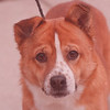 3/13/97 Pet of the week - James Neiss Photo