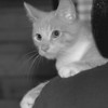 98/08/06 Pet of the Week - James Neiss Photo -