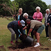 98/06/03 Tree Donation * Dennis Stierer Photo - A new tree donated by MATABC, Middleport Area Tourism And Beautification Committee was planted at Margaret Droman Park in Middleport.  Helping to do this great deed is Bob Querns, with the Tree Committee of Middleport and Don Piedmont, mayor of Middleport. Watching (from left) are Liz Storch, with the Tree Committee; Margaret Droman, after whom the park was named; Julie Maedl, with MATABC; Betty Querns, resident of Middleport; and Janet Lyndaker, also with MATABC.<br /> <br /> Janet Lyndaker requested that this run in all of our newspapers, including Medina, and Medina supplement.<br /> I told her that was up to the editors.