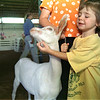 "98/07/31 Good Goat-Rachel Naber Photo-Jenny McKenna, 3 years old, gives ""Elana"" the goat a scratch under the chin for good behavior during the kids goat show at the Orleans county Fair."