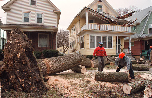 2/22/97-- wind --Takaaki Iwabu photo-- City Park workers from Forest Dept. clear up the tree which fell down by Saturday's strong wind and damaged the house on 1830 Willow Ave.  ( it alos knocked down telephone  and capble lines...) <br /> <br /> local, Sunday