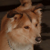 98/03/12 Pet of the Week - James Neiss Photo
