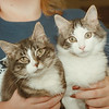98/01/22 Pet of the Week - James Neiss Photo - Twins