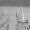 98/11/07 Sailing-Rachel Naber Photo- A sailboat gives it's passengers a great view of fall foliage along route 18f in Youngstown.
