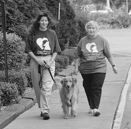 """8/1/97 Canine Helpers - James Neiss Photo - Kristen Marshanke, Assistant Trainer with Canine Helpers for the Handicapped, Inc. walks """"Molly"""" a dog in training along with Hilde Henricks, a volunteer."""