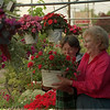98/05/11 Beautiful Flowers *Dennis Stierer Photo -  Joanie Arnold (right in red shirt) of Medina seems very pleased with the flowers she is about to purchase from Susan Phillips  owner of Phillips Children's Roadside Stand.
