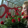 98/1/28 V Day Flower-Rachel Naber Photo-Cindy Davis decorated the greenhouse at Lewis's flowershop in Lockport in anticpation of  Valentine's day.
