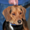 98/02/12 Pet of the Week - James Neiss Photo -